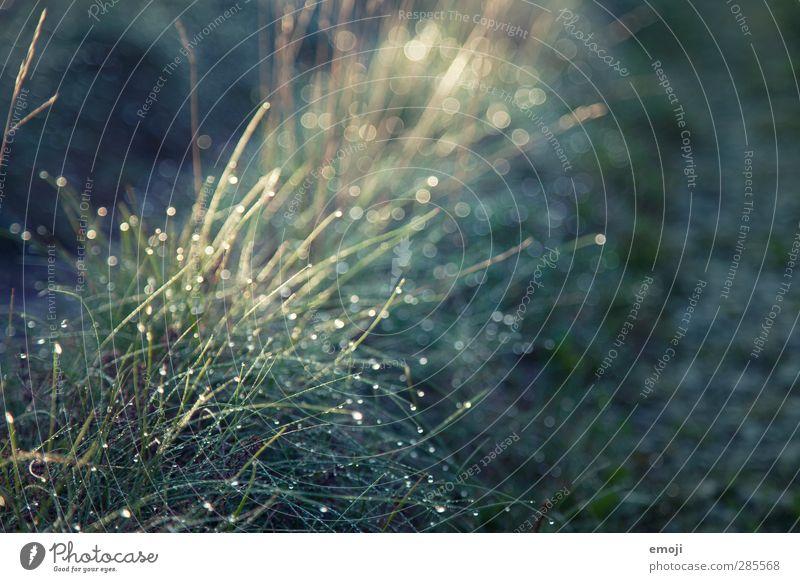 Nature Green Landscape Environment Meadow Grass Garden Natural Rain Wet Drops of water