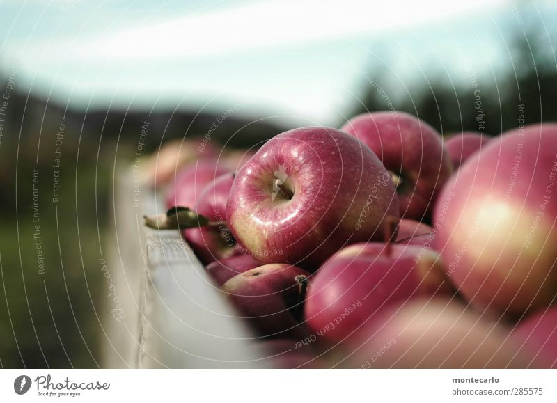 eat more apples... Food Fruit Apple Environment Nature Autumn Authentic Firm Fresh Delicious Natural Round Juicy Sweet Red Harvest Colour photo Multicoloured