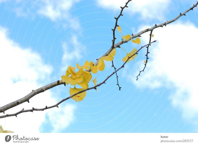 Sky Nature Blue Beautiful Plant Tree Clouds Yellow Environment Autumn Emotions Garden Air Park Hope Romance