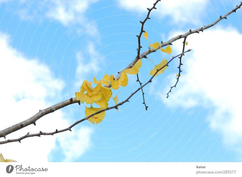 Sky Nature Blue Beautiful Plant Tree Clouds Yellow Environment Autumn Emotions Garden Air Park Hope Romance