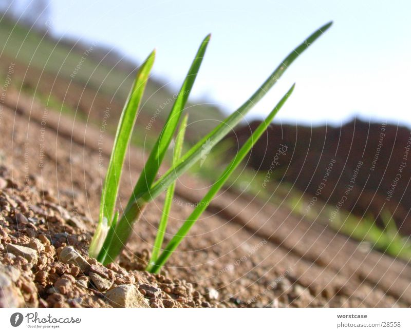 grass seedlings Plant Grass To break (something) Brown Green Floor covering Earth Close-up