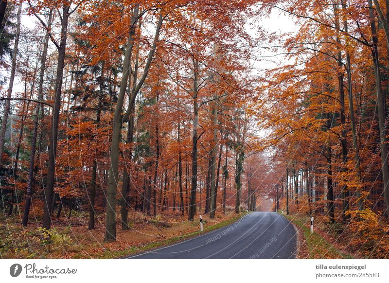 no traffic jam message Nature Autumn Tree Traffic infrastructure Road traffic Street Orange Seasons Federal highway Reflector post Country road Curve