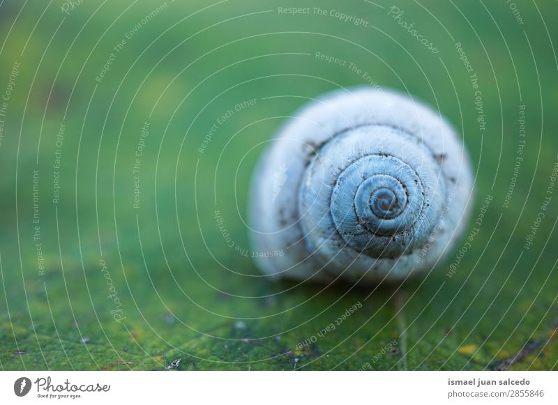 snail on the plant Snail Animal Bug White Insect Small Shell Spiral Nature Plant Garden Exterior shot Fragile Cute Beauty Photography Loneliness background