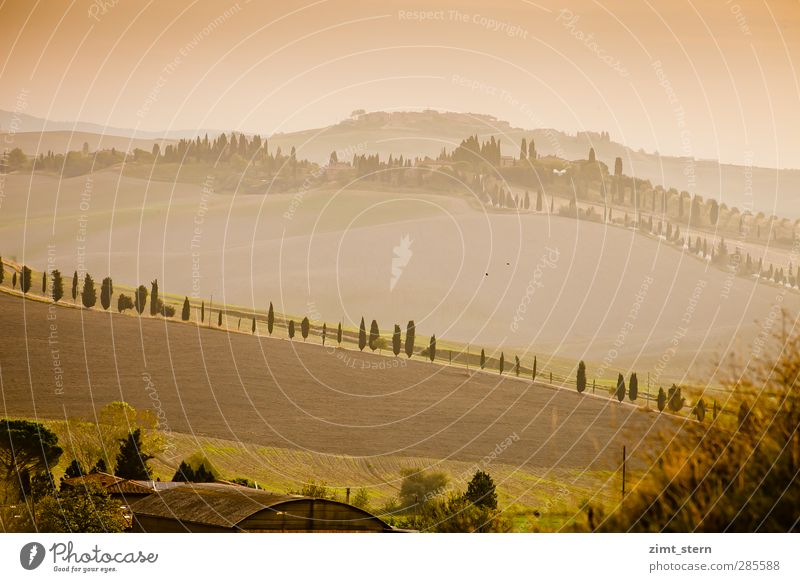 Morning light in Tuscany Well-being Contentment Senses Relaxation Vacation & Travel Tourism Trip Far-off places Agriculture Forestry