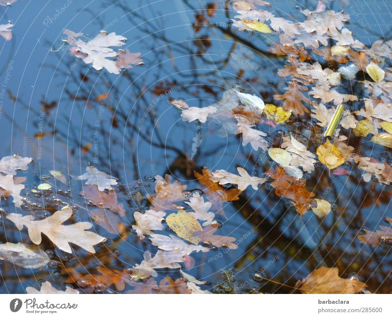 change... Environment Air Water Sky Sunlight Autumn Beautiful weather Tree Leaf Park Pond Lake To fall Swimming & Bathing Many Wild Blue Brown Yellow Emotions