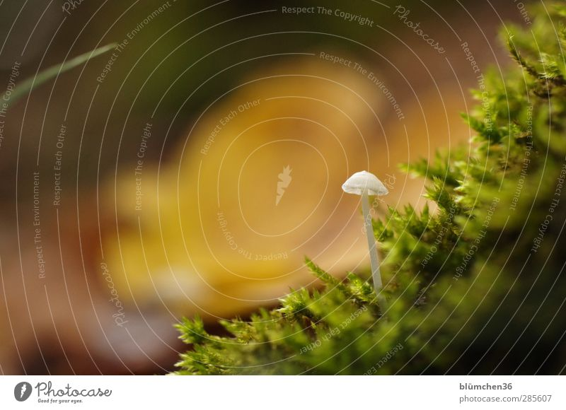 Wild! White! Tiny! Food Vegetable Nutrition Nature Plant Autumn Mushroom Mushroom cap Moss Carpet of moss Forest Growth Small Delicious Natural Beautiful Soft