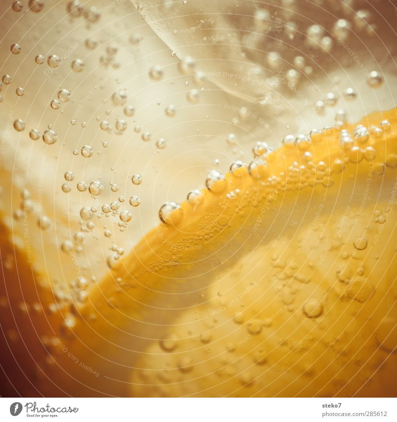 the summer has been cold-blooded Water Fresh Healthy Cold Orange Ice Beverage Carbonic acid Tingle Summery Colour photo Macro (Extreme close-up) Deserted