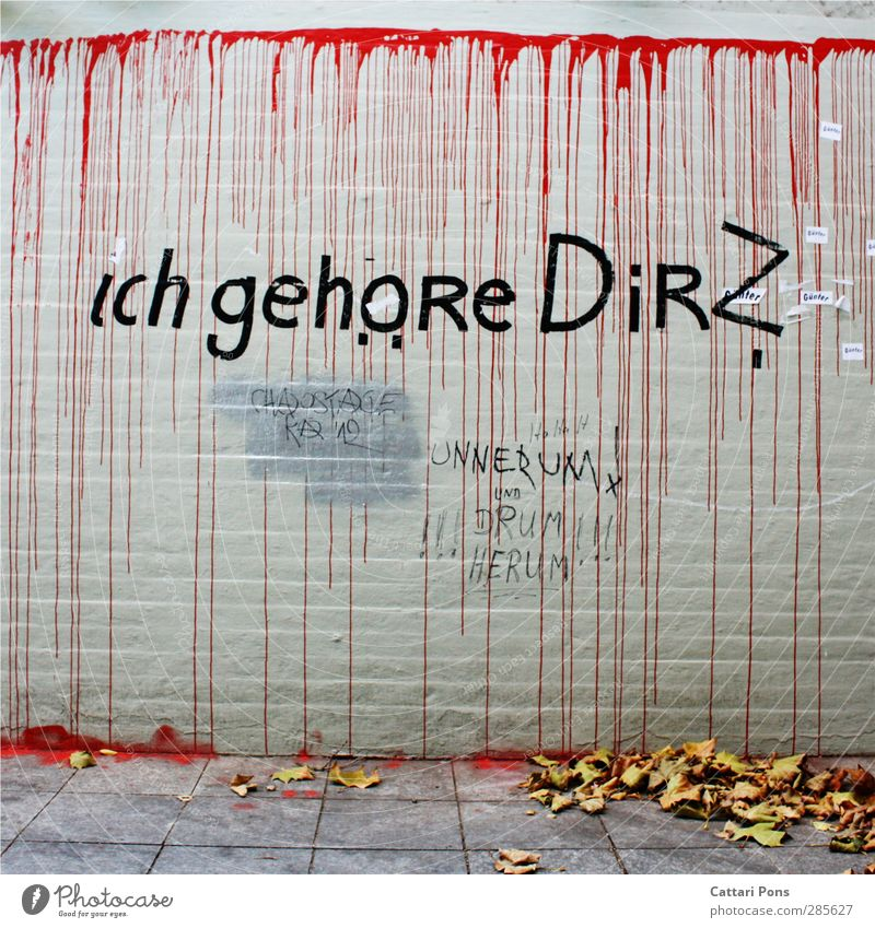 City Red Colour Leaf Love Graffiti Wall (building) Autumn Wall (barrier) Stone Crazy Things Ask Text Limp Street art