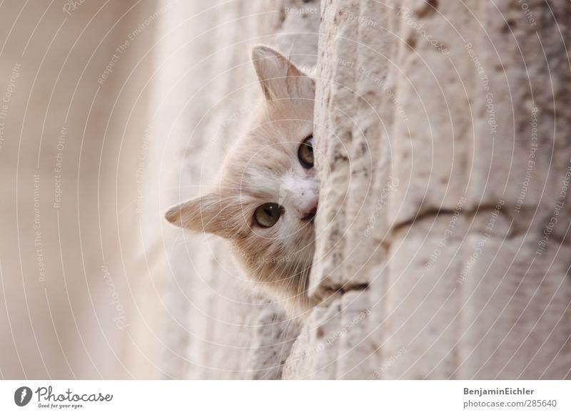 Cat Beautiful Animal Playing Gray Bright Earth Contentment Poverty Wait Illuminate Esthetic Communicate Observe Good Friendliness
