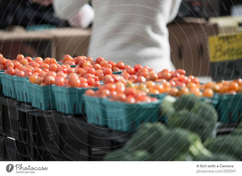 down at the market Food Vegetable Tomato Organic produce Vegetarian diet Fasting Fresh Healthy Together Markets Sell Presentation Subdued colour Exterior shot