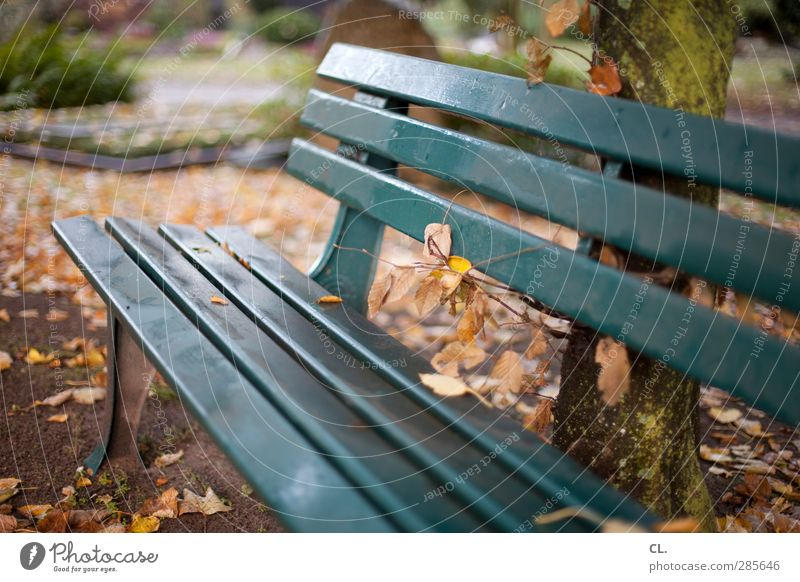 resting place Nature Landscape Autumn Tree Leaf Park Sit Wait Calm Loneliness Relaxation Idyll Break Stagnating Transience Bench Autumn leaves Autumnal