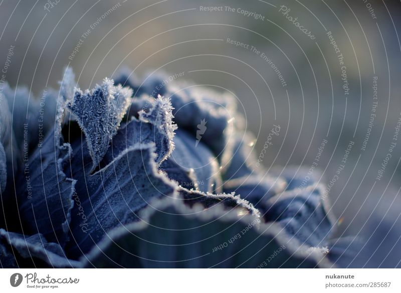 Nature Blue Plant Leaf Winter Cold Autumn Garden Moody Ice Natural Healthy Eating Field Food Fresh Esthetic
