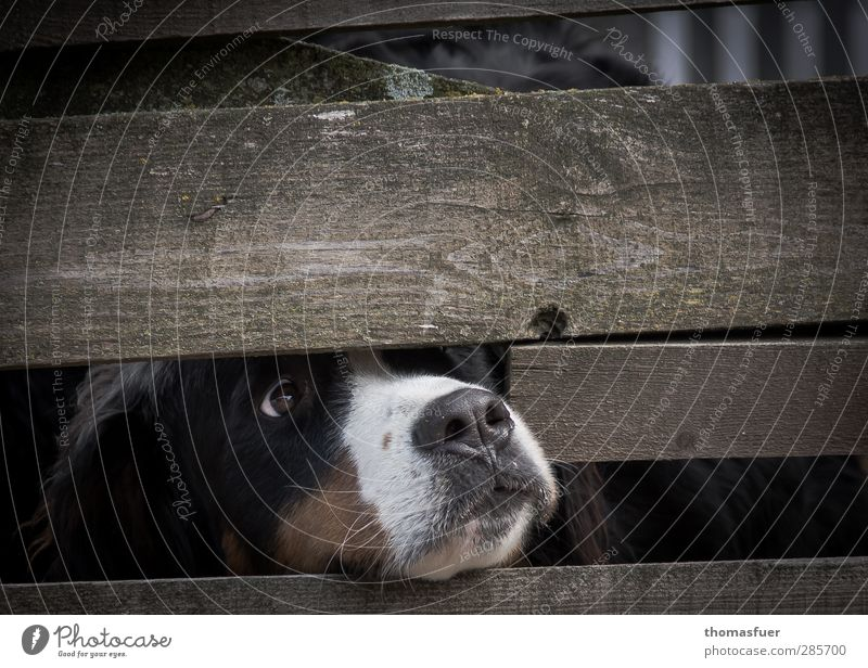 dog's life Animal Pet Dog 1 Sadness Curiosity Brown Appetite Longing Disappointment Fence Gap in the fence Captured animal suffering Subdued colour