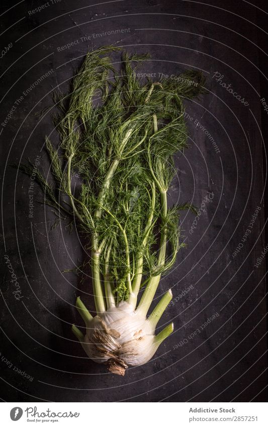 Fresh frennel on dark background Agriculture antioxidant Background picture Bulb Dark Diet Fennel flavor Food Green Healthy Herbs and spices Ingredients Leaf