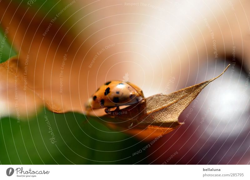 Disappear in the Blur Environment Nature Plant Animal Sunlight Weather Beautiful weather Grass Leaf Garden Park Meadow Wild animal Beetle 1 Crawl Sit
