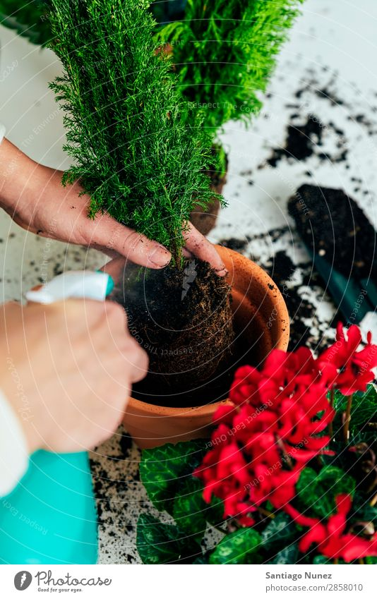 Woman's hands transplanting plant. Home Plant Sow Sowing replanting Gardening Pot Flowerpot Growth ferns Human being Lifestyle Seeds Manure bio Domestic eco