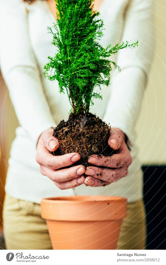 Woman's hands transplanting plant. Home Plant Sow Sowing Gardening