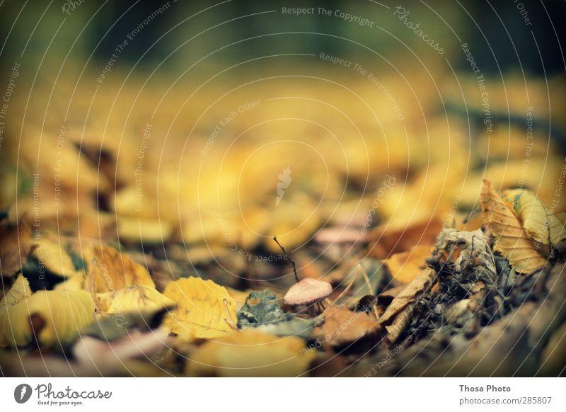 Nature Leaf Landscape Forest Yellow Autumn Gold Mushroom