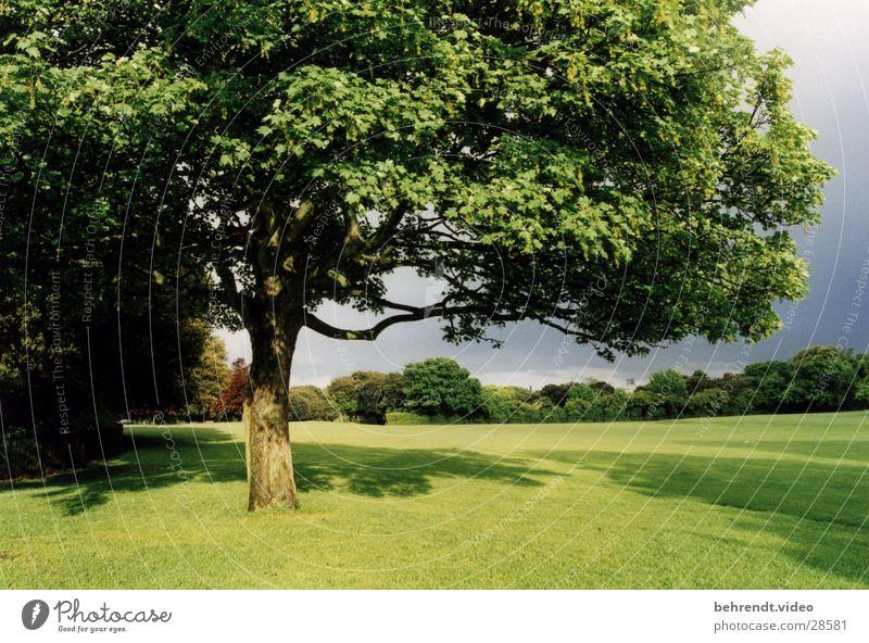 Nature Tree Green Life Meadow Park Fresh Lawn Ireland Dublin