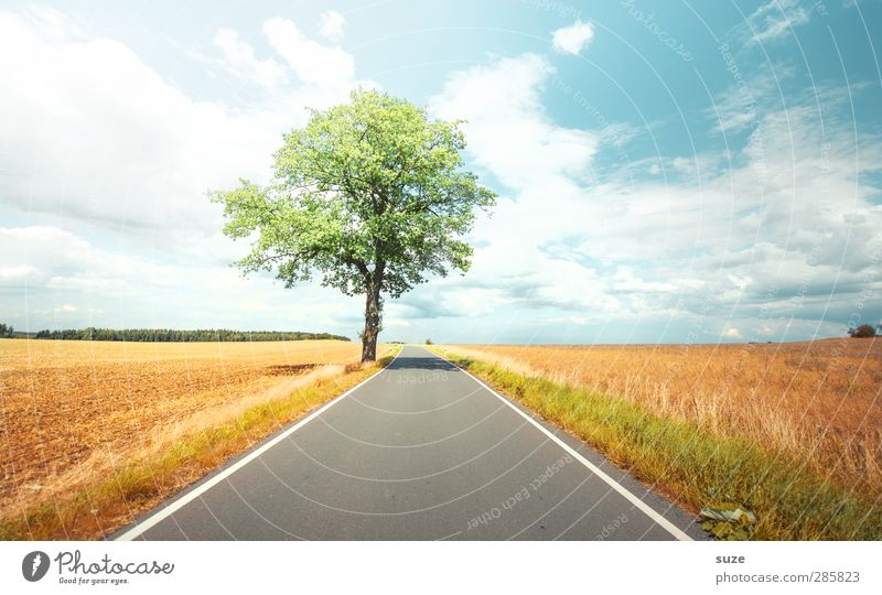 summertime Environment Nature Landscape Plant Sky Clouds Horizon Autumn Weather Beautiful weather Tree Meadow Field Transport Traffic infrastructure Street