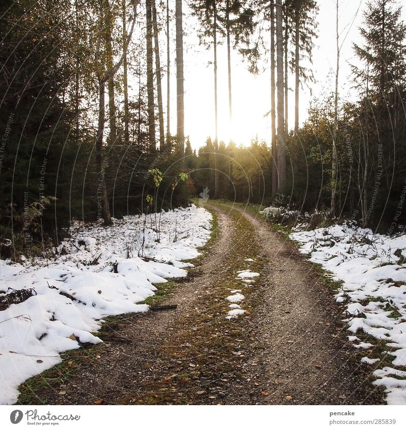 How to find us Nature Landscape Sunlight Autumn Winter Snow Forest Lanes & trails Moody Brave Romance Bend Shaft of light Light Tree Spruce forest Description