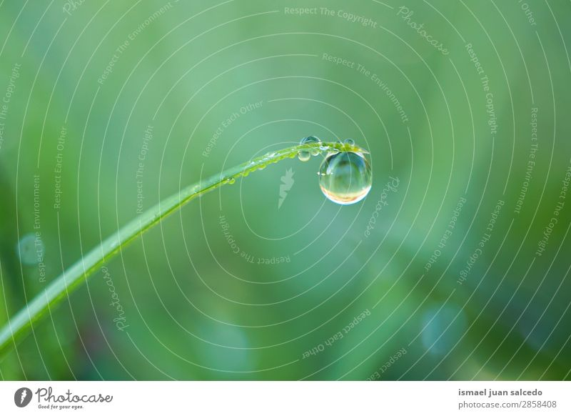 drops on the plant Grass Plant Leaf Green Drop Rain Glittering Bright Garden Floral Nature Abstract Consistency Fresh Exterior shot Neutral Background