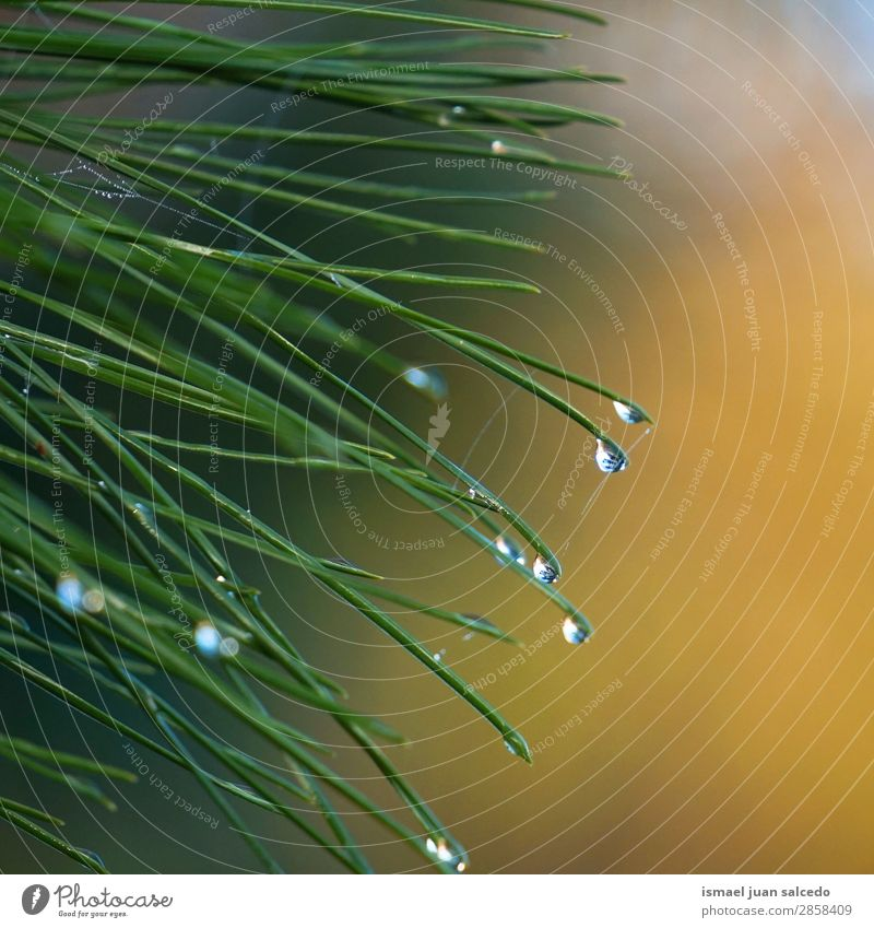drops on the green leaves Plant Leaf Green Drop Rain Glittering Bright Garden Floral Nature Abstract Consistency Fresh Exterior shot background