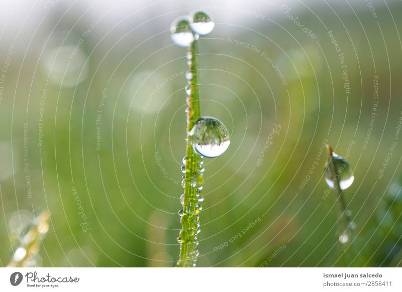 drops on the plant Grass Plant Leaf Green Drop Rain Glittering Bright Garden Floral Nature Abstract Consistency Fresh Exterior shot background