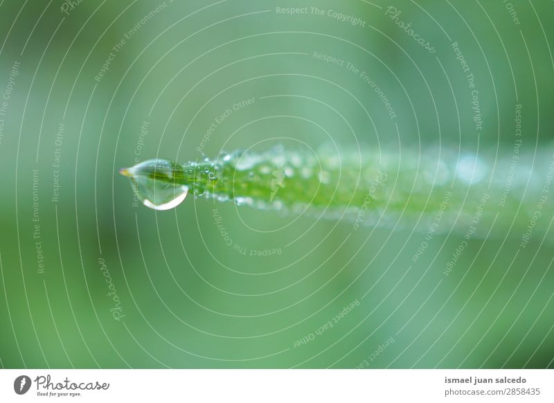 drops on the green leaves Grass Plant Leaf Green Drop Rainproof Glittering Bright Garden Floral Nature Abstract Consistency Fresh Exterior shot background