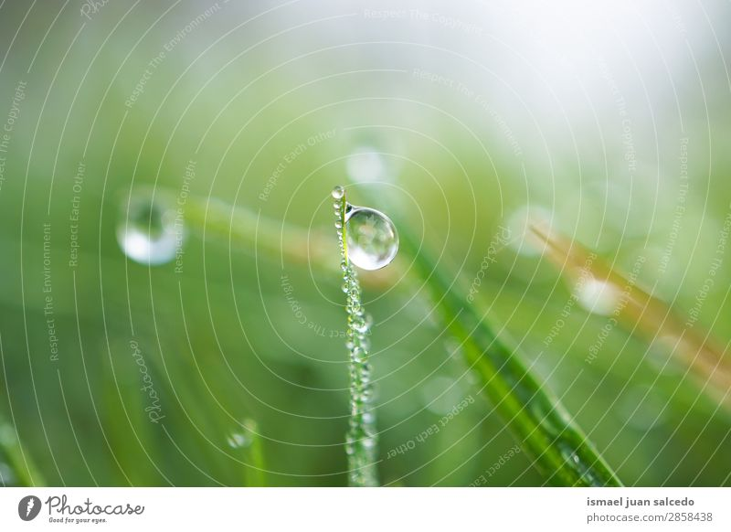 drops on the green leaves Grass Plant Leaf Green Drop Rain Glittering Bright Garden Floral Nature Abstract Consistency Fresh Exterior shot Neutral Background