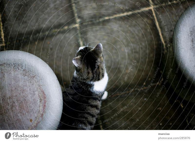 Cat Nature Animal Above Cute Curiosity Pelt Pet Smart Endurance Love of animals Astute