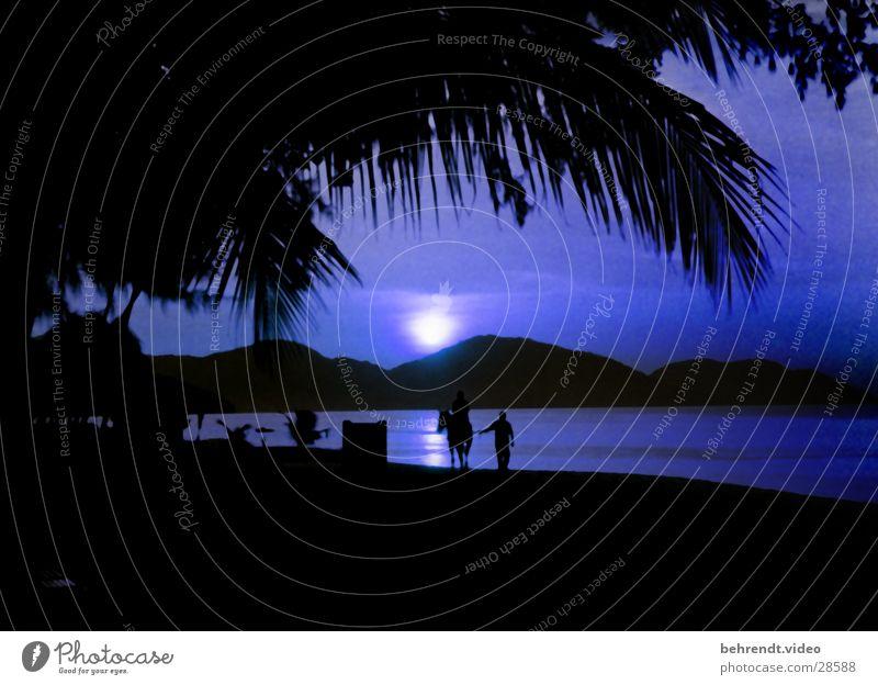Moonlight on the beach of Penang (Malaysia) Ocean Palm tree Night Horse Beach Malaya Light (Natural Phenomenon) Blue Water Mountain Rider Island