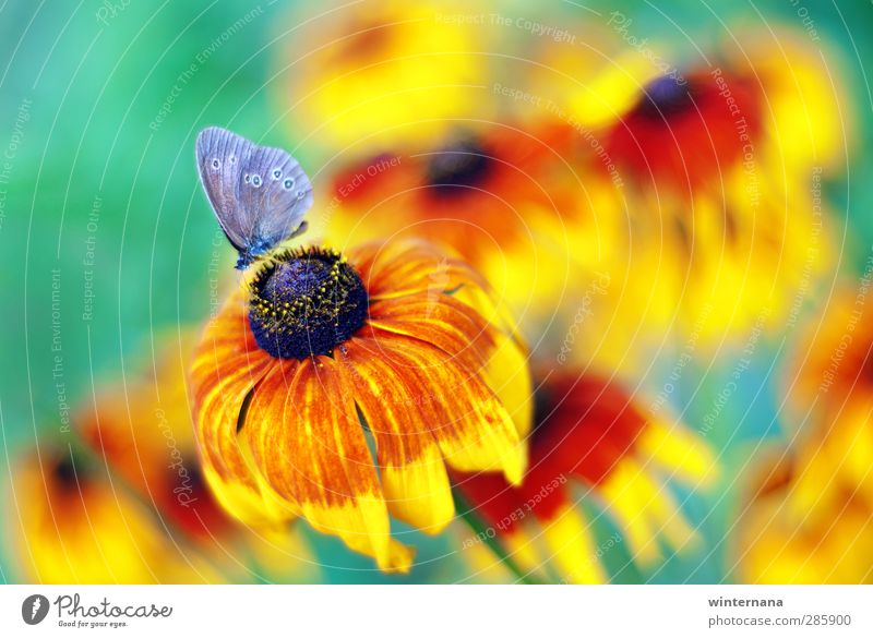 butterfly Nature Summer Flower Butterfly Uniqueness Elegant Energy Discover Eternity Exotic Colour Joy Colour photo Exterior shot Day Deep depth of field