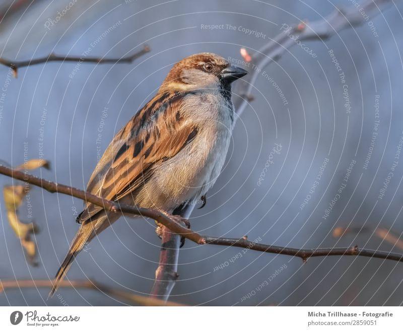 Sparrow in the sunshine Nature Animal Sky Sunlight Beautiful weather Tree Twigs and branches Wild animal Bird Animal face Wing Claw Passerine bird Beak Eyes