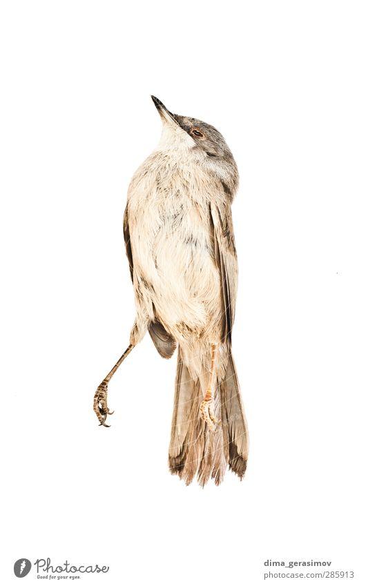 Bird Nature Animal Yellow Gray Sadness Fear Wild animal Change Wellness Fear of death Illness Pain Stress