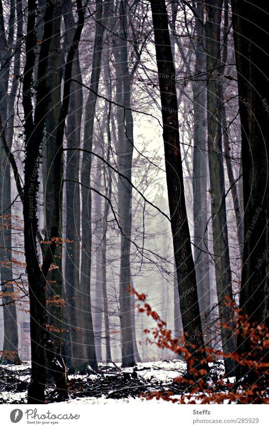 hidden behind the light Environment Nature Landscape Winter Snow Leaf Tree Deciduous tree Forest Winter forest Cloud forest Cold Calm Forest atmosphere