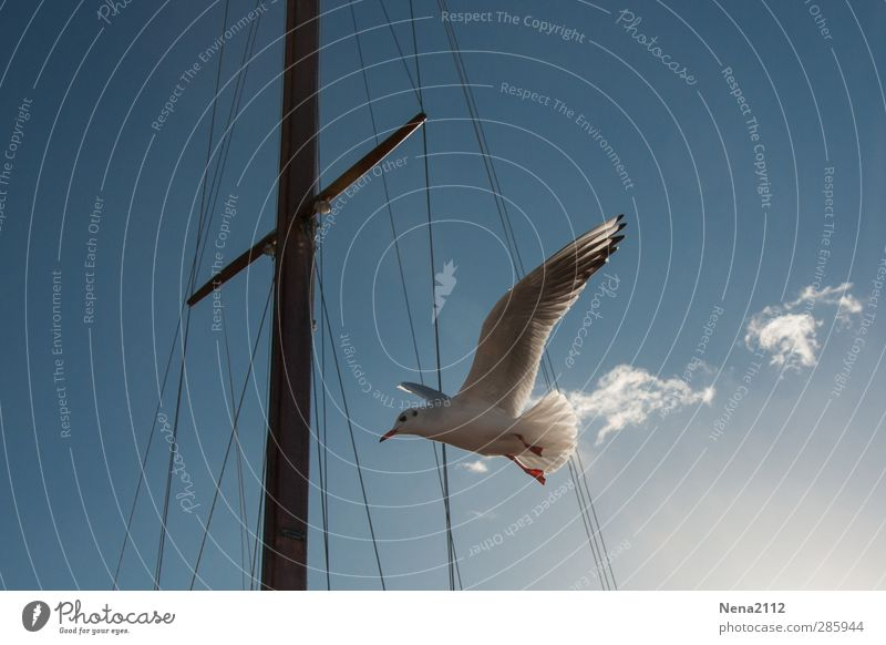Flying away... Animal Bird 1 Blue White Seagull Gull birds Watercraft Sailboat Mast Harbour Clouds Bow tie Floating Freedom Colour photo Exterior shot Close-up