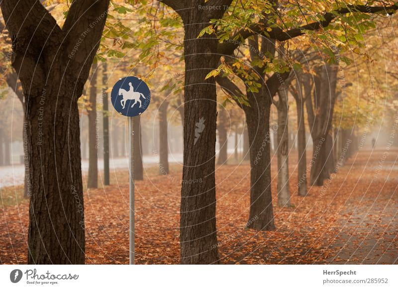 """""""A horse, a horse, my kingdom for a horse..."""" Human being Feminine Woman Adults 1 18 - 30 years Youth (Young adults) Autumn Fog Tree Leaf Park"""