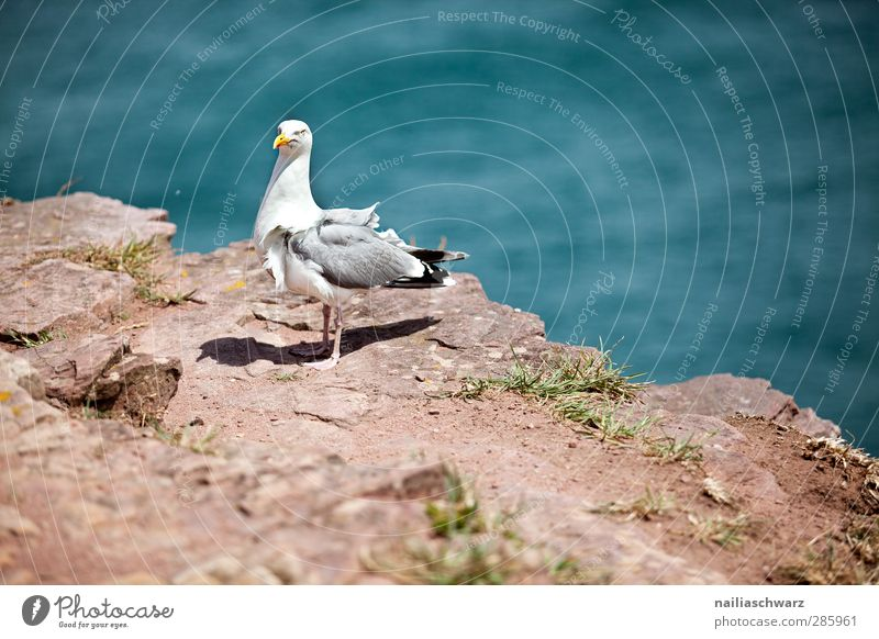seagull Environment Nature Landscape Water Summer Coast Ocean Atlantic Ocean Brittany Animal Wild animal Bird Seagull 1 Stand Colour photo Exterior shot