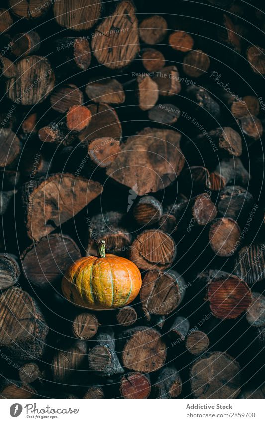Pumpking in a pile of trunks Autumn Feasts & Celebrations Copy Space Decoration firewwod Food Fruit Hallowe'en Harvest October Orange Accumulation Rustic Fear