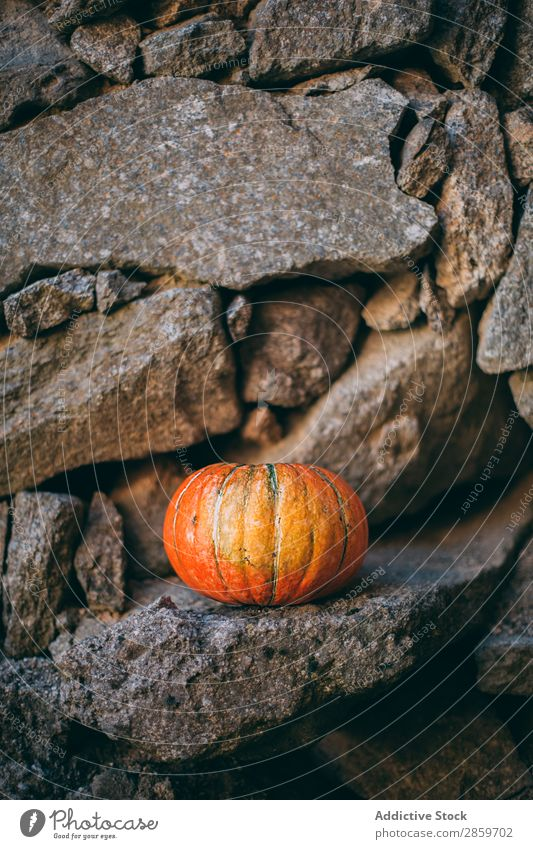 Pumpking with a stone wall background Autumn Feasts & Celebrations Copy Space Decoration Food Fruit Hallowe'en Harvest October Orange Rustic Fear Spooky