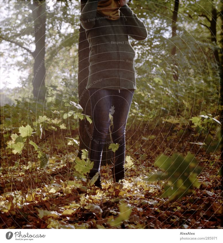 Nature Youth (Young adults) Green Tree Joy Leaf Adults Forest Young woman Autumn Wood Legs 18 - 30 years Moody Brown Park