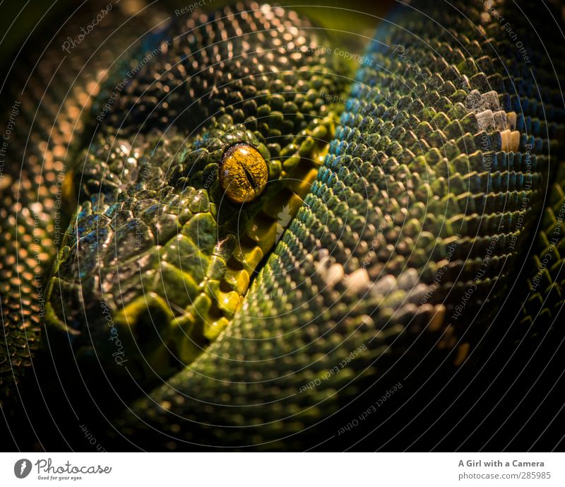 is what? Animal Wild animal Snake Zoo Aquarium 1 Exceptional Exotic Beautiful Green Unpredictable Relaxation Looking Furtive Colour photo Multicoloured