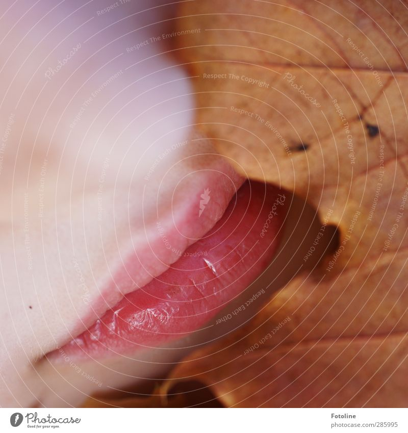 Tasteful autumn colours Human being Feminine Girl Infancy Skin Face Nose Mouth Lips Environment Nature Plant Autumn Leaf Bright Near Natural Brown Pink Autumnal