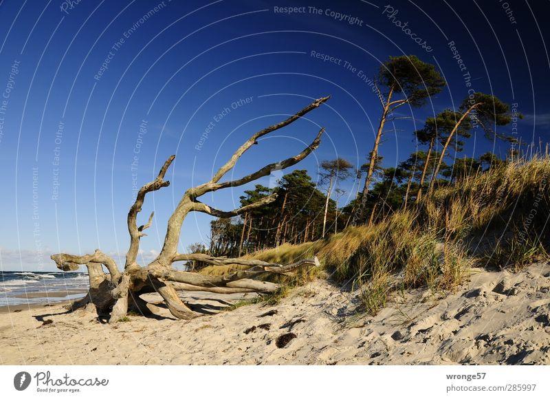 Sky Nature Blue Tree Beach Calm Landscape Relaxation Autumn Coast Horizon Brown Fantastic Baltic Sea Discover Cloudless sky