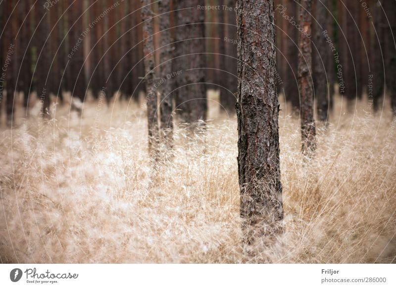 Nature Tree Landscape Forest Autumn Grass Earth Esthetic Infinity Wild plant