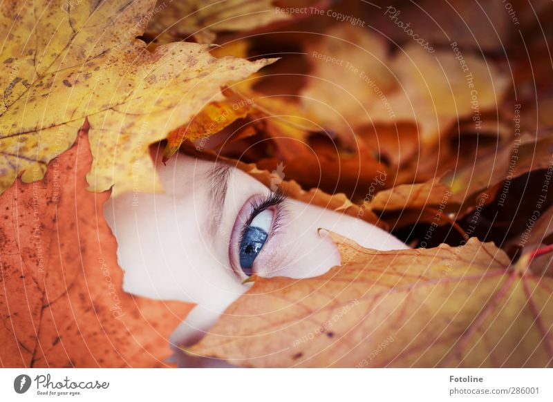 Look me in my eye HERBST Human being Feminine Girl Infancy Skin Face Eyes Environment Nature Plant Autumn Beautiful weather Leaf Bright Near Natural Blue Brown