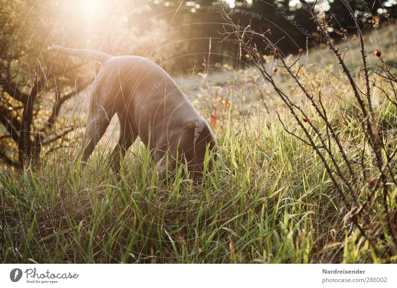 Dog Nature Summer Plant Joy Animal Forest Meadow Autumn Grass Playing Natural Free Fresh Stand Beautiful weather