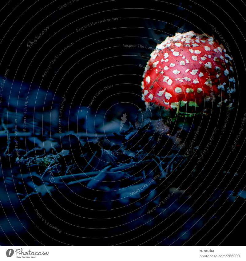 mushroom dish Healthy Eating Nature Forest Illuminate Threat Red Black White Dangerous Detective novel Amanita mushroom Mushroom Mushroom cap Mysterious Dark