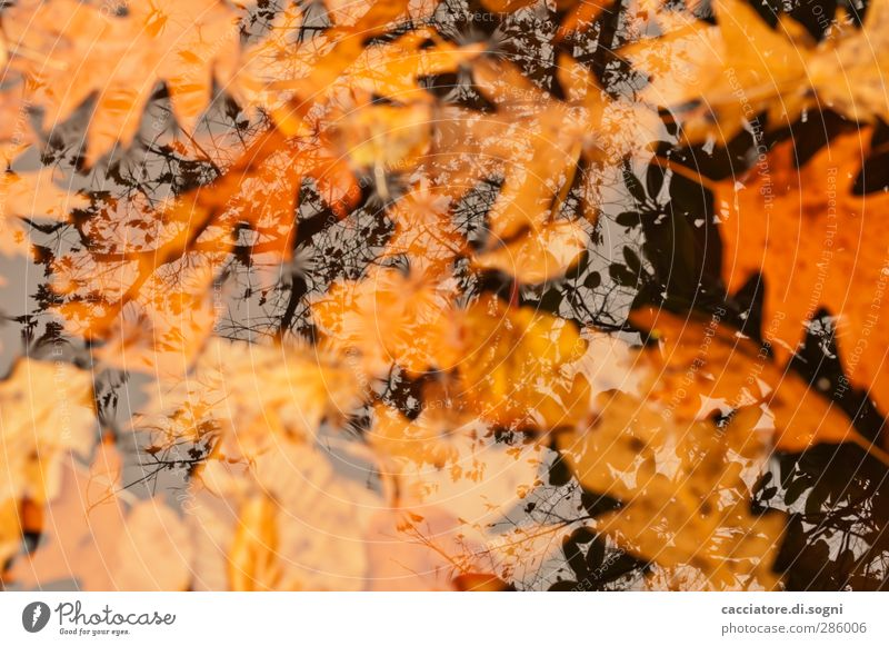 once we were at the top Water Autumn Leaf Pond To fall Swimming & Bathing Sadness Dark Far-off places Cold Wet Natural Orange Black Emotions Longing
